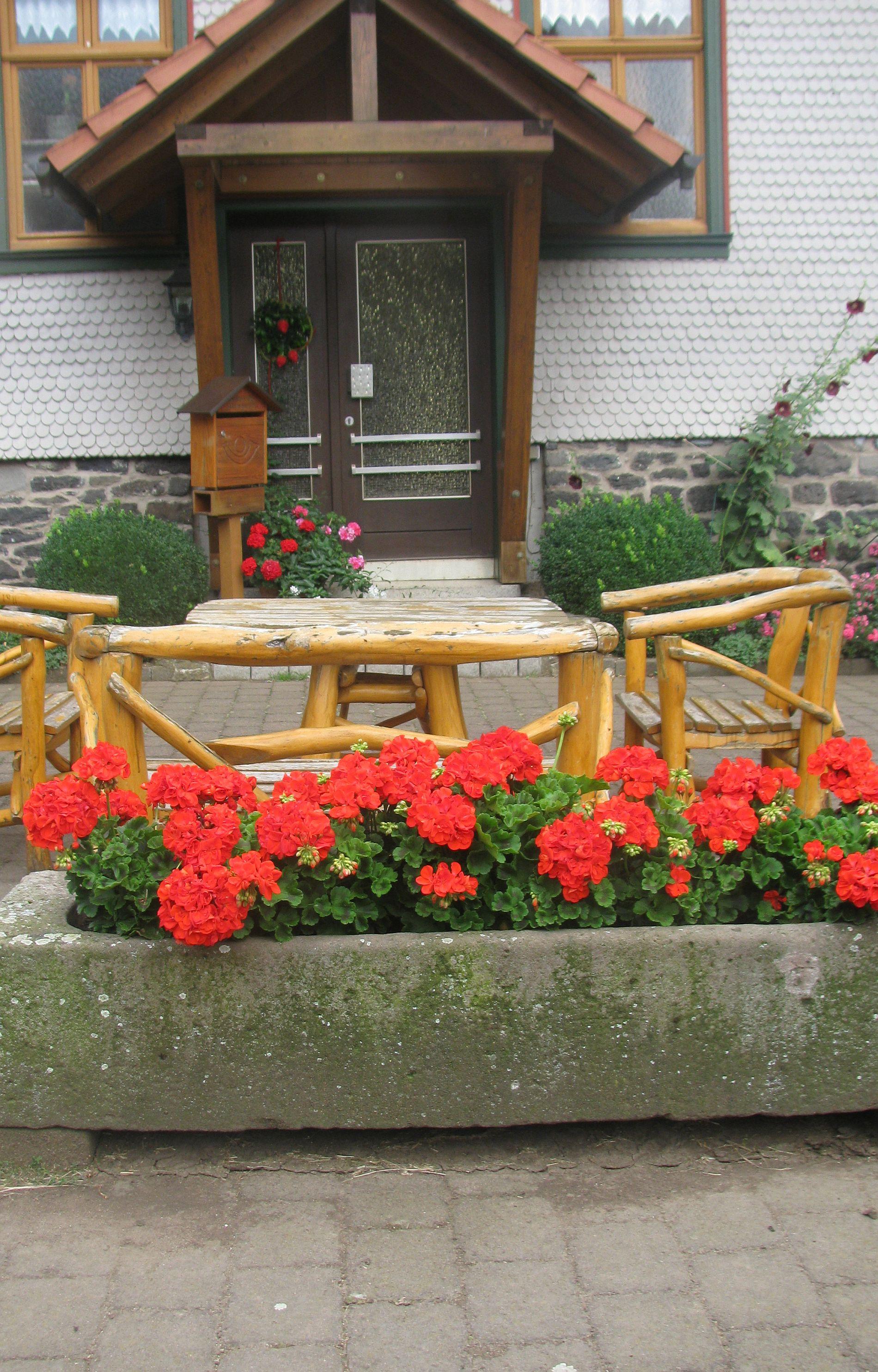 Geranienblüte in alten Trögen